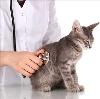 Ветеринарные клиники в Бийске